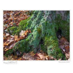 Moss and Lichen, Autumn